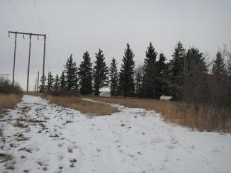 Location of new tree line
